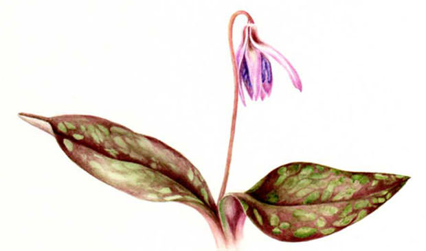 pittura-botanica_1
