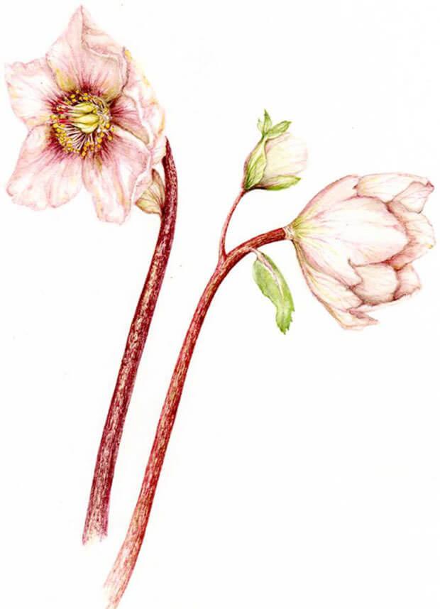 pittura-botanica_2