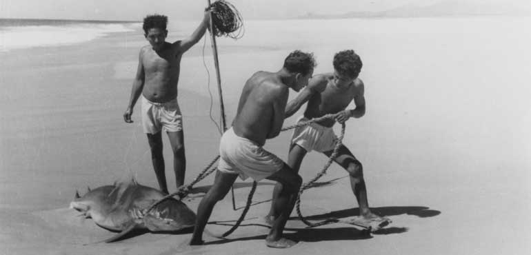 pescatori di squali