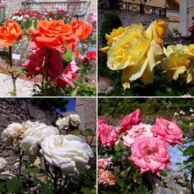 Le rose del giardino botanico di Miranda de Ebro