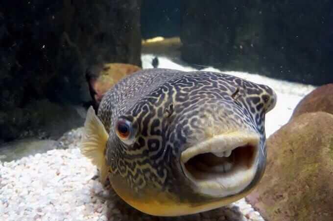 Un pesce dell'acquario di Saragozza