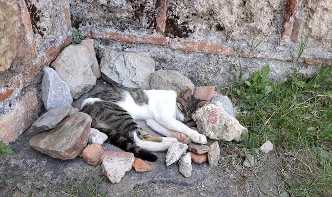 Un gatto sonnecchia nel sito bizantino di Mistrà