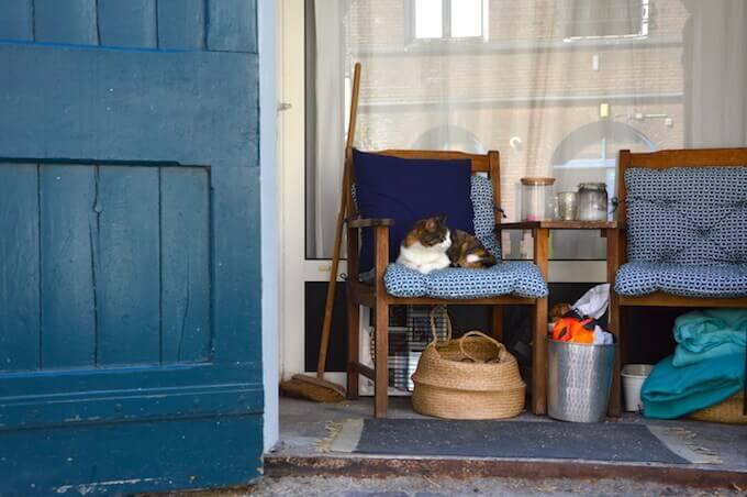 Un gatto a Utrecht, in Olanda