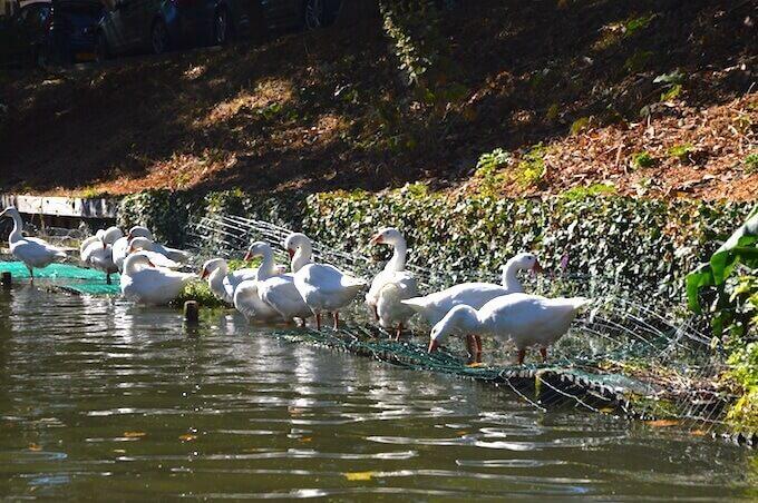 Utrecht: oche sulla riva di un canale