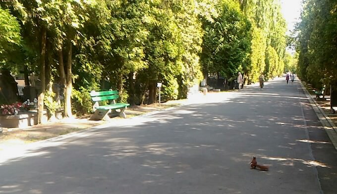 Uno scoiattolo nel cimitero militare di Varsavia