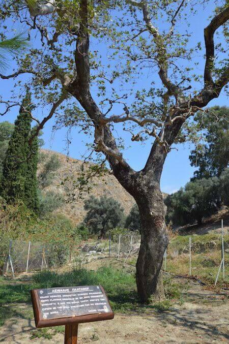 Il platano di Zeus a Gortina (Creta)