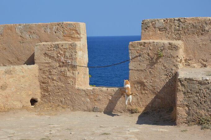 Un gatto nella fortezza veneziana di Rethimno