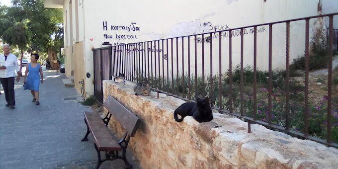 Gatti di Chania, Creta
