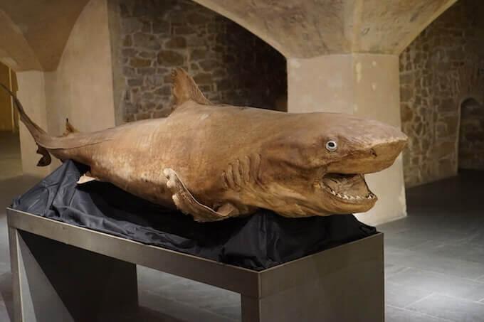 """""""Di squali e di balene"""" al Museo Marino Marini di Firenze"""