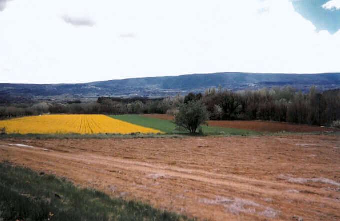 Un campo di grano e colza in Provenza