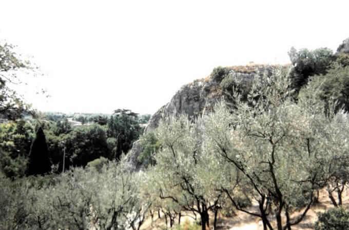 Ulivi a Cavaillon