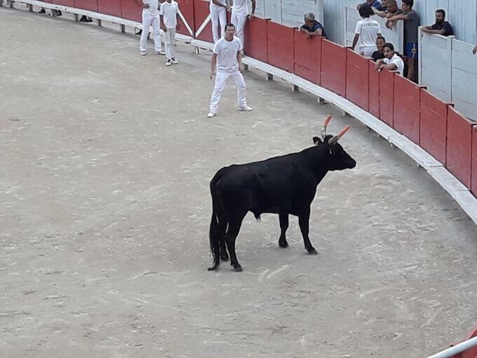 Un toro nell'arena di Arles